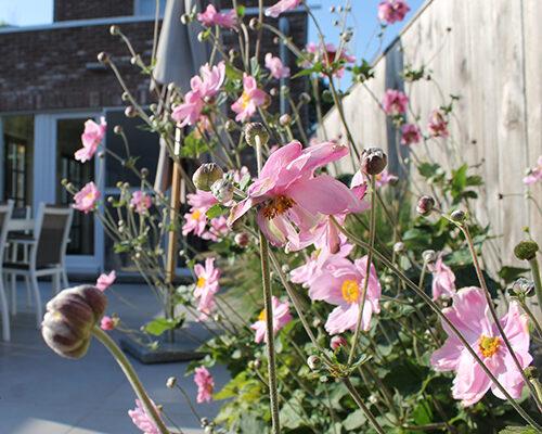 rozebloemen